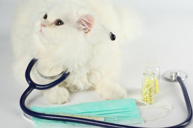 glavna maca špricati masaža porno u hd