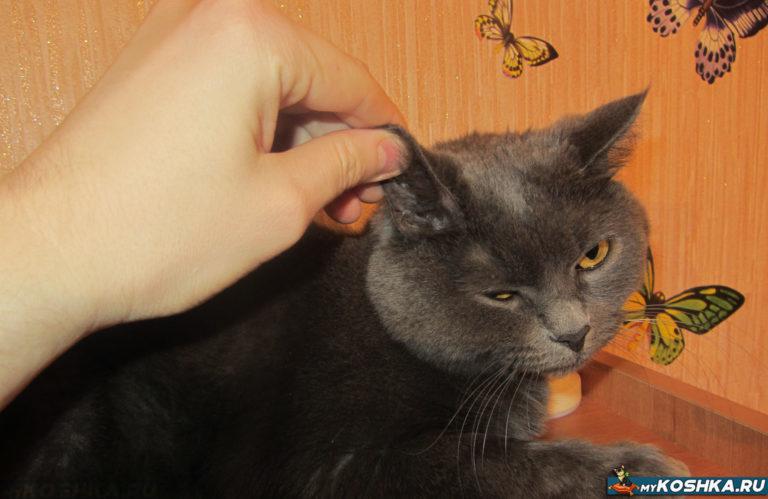 Tesné chlpaté mačička video