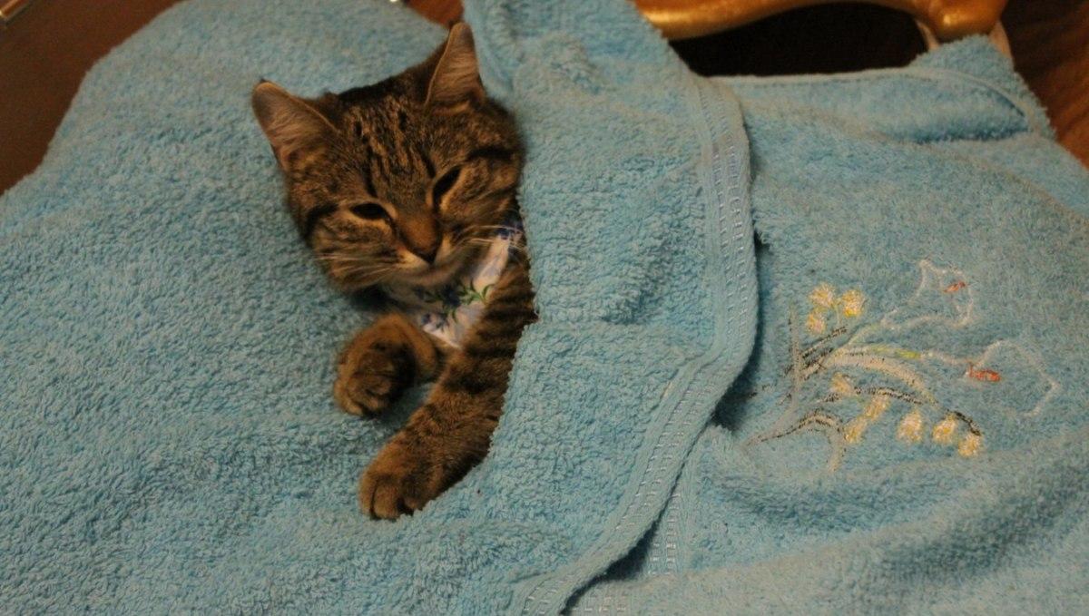 kako napraviti maca špricati