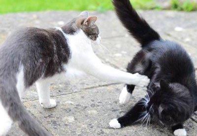 Zrelé mačička sólo