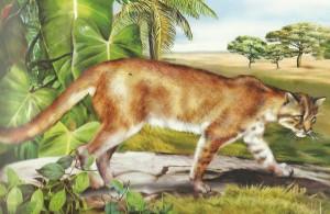 Obrovské africké mačička