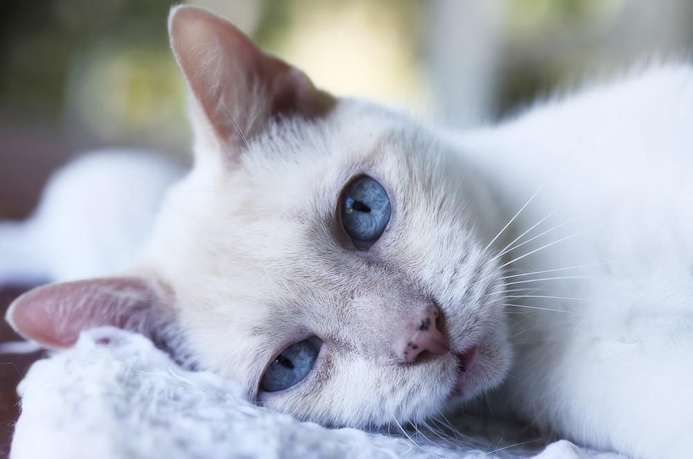 chlpaté mačička veľké prsia obrázkyako sa dostať Fajčenie