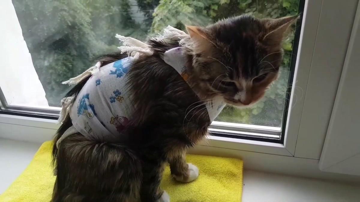 Domaća maca špricati