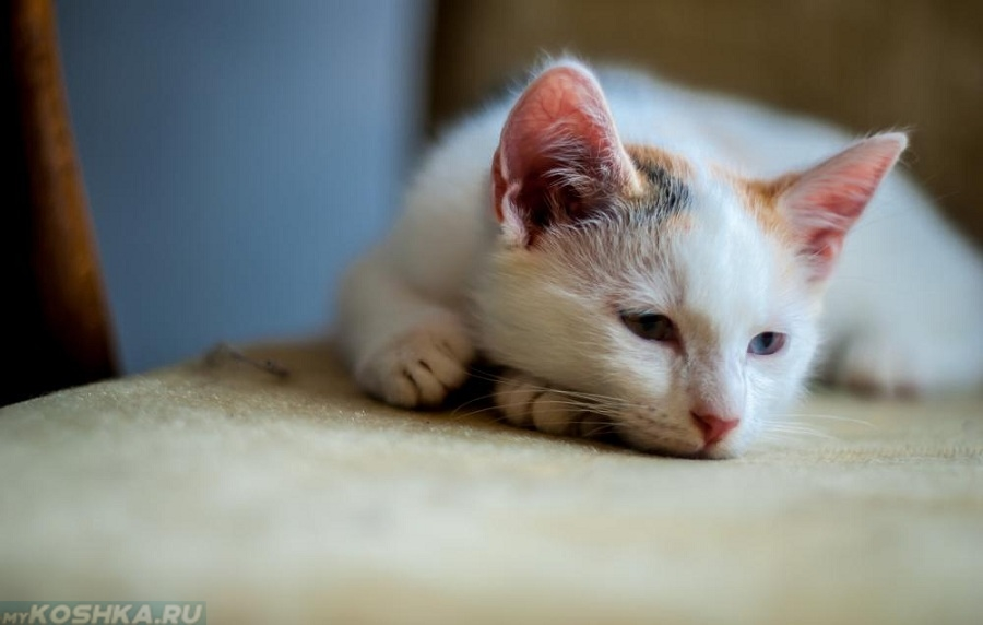 zrelé tesný mačička